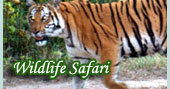 Wildlife Jungle Safari / Wild Adventure / Chitwan / Bardia National Park & Wildlife Reserve, Chtawan national park, Safri tour in nepal....